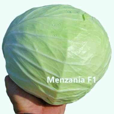 Λα΄χανο Menzania F1 σπόρος