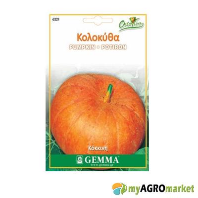 Κολοκύθα γίγας πορτοκαλί σπόρος kolokutha gigas sporos pumpkin